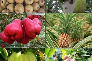 海南8月份有什么特色水果