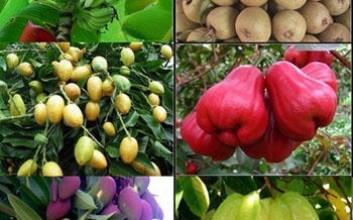 海南9月上市的水果有哪些