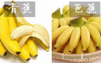芭蕉和香蕉有什么区别
