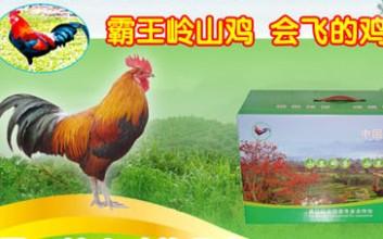 霸王岭山鸡荣膺国家地理标志保护产品
