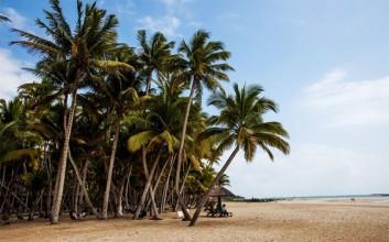 文昌新增种植椰子树30万亩助农脱贫