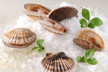 海南餐桌常见的贝类海鲜,你知道哪些