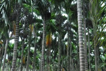 海南最大槟榔城将在万宁落成