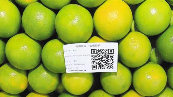 如何辨别海南琼中绿橙的真伪