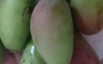海南青芒果怎么吃【图解】