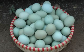 儋州绿壳鸡蛋
