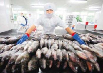 海南渔产品价格五年内首跌