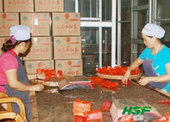 海南农垦加快组建茶叶产业集团