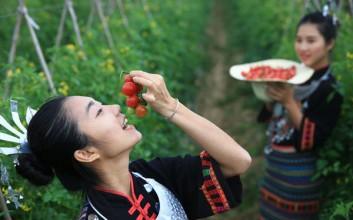 陵水圣女果正式获评国家地理标志保护产品