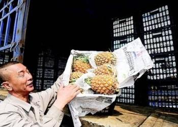 海南菠萝芒果多地热销,成为果摊上的主角