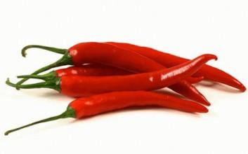 定安红辣椒收获喜人,最高价卖到8元一斤