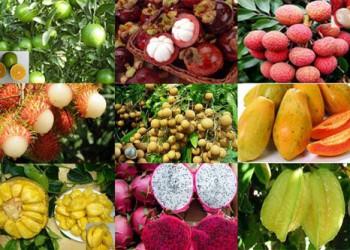 海南热带水果精品馆在呼和浩特开馆