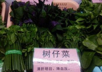 海南树仔菜
