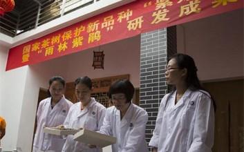 五指山雨林紫鹃系列茶产品研发成功