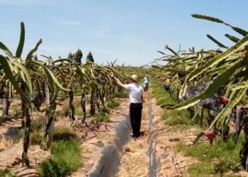 东方重点打造火龙果等十大农业知名品牌