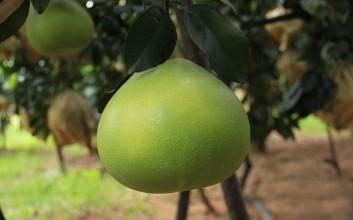 海南12月上市的水果有哪些