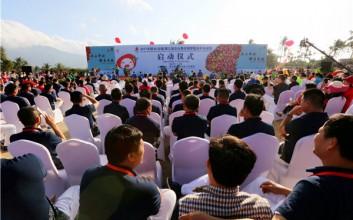 2017海南陵水光坡圣女果采摘季活动开幕