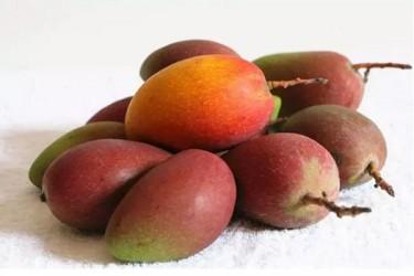 海南4月上市水果大集合,你见过不一定吃过!