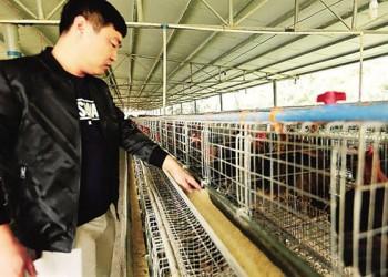 琼中打造特色山鸡品牌,助力贫困户脱贫