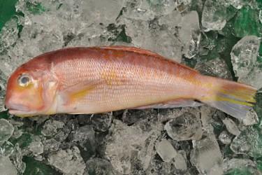 海南餐桌常见的海鱼品种,你吃过哪些?