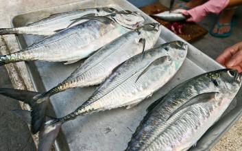 东方铁甲鱼