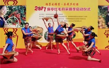 2017保亭红毛丹采摘季活动正式启动
