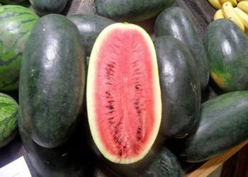 海南常见的西瓜品种有哪些
