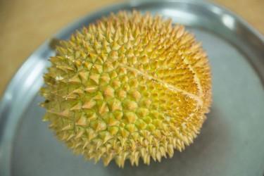 海南榴莲种植热度持续上升,能不能大规模商业种植?