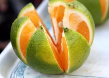 琼中绿橙多少钱一斤