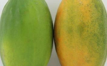 青木瓜和水果木瓜有什么区别