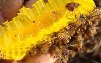 琼中蜂蜜质量为什么这么好?