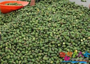 2021海南槟榔产量大幅增长,总产量同期增长9.17%