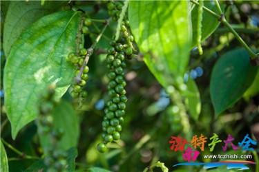 喜讯!海南又增7个国家地理标志农产品