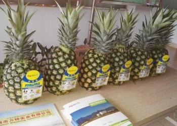 乐东金菠萝
