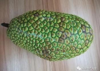 2019年8月3日海南7种水果零售价格表