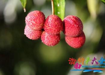海南5月主要上市水果介绍,你都吃过哪些?