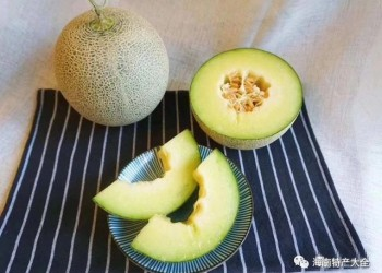 海南甜瓜种植区域参考,没有比这更详细的了!