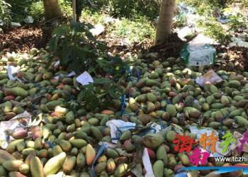 海南水果时常滞销,为什么市场还卖那么贵?