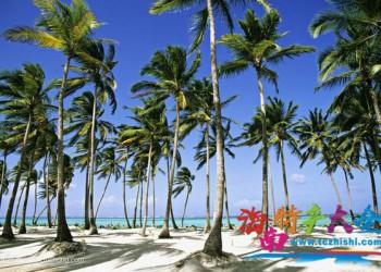 椰子在海南是一种怎样的存在,你真的懂它吗?