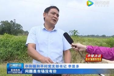 儋州中和镇80万斤扶贫香芋滞销 急寻买家