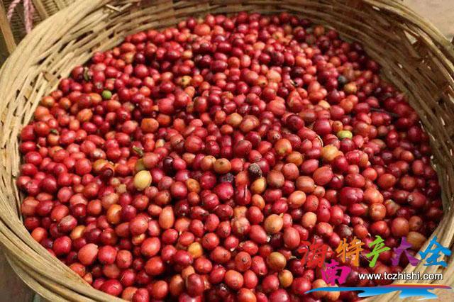 福山咖啡豆