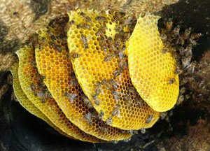 原生态蜂蜜