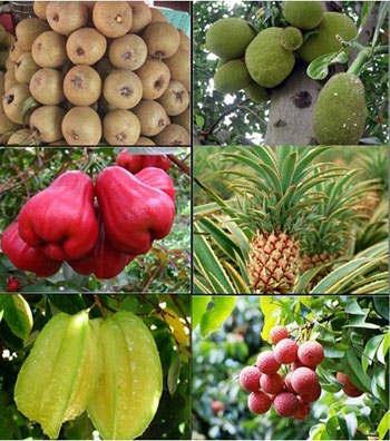 海南八月水果