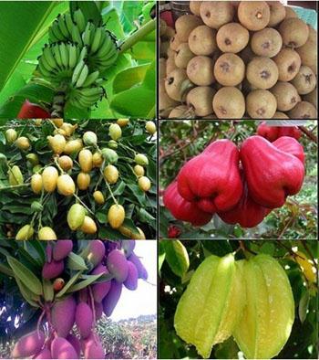 海南9月水果