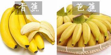 香蕉和芭蕉
