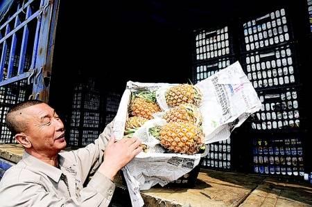 海南菠萝热销