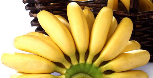 皇帝蕉,也叫小米蕉