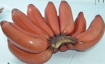 海南红香蕉