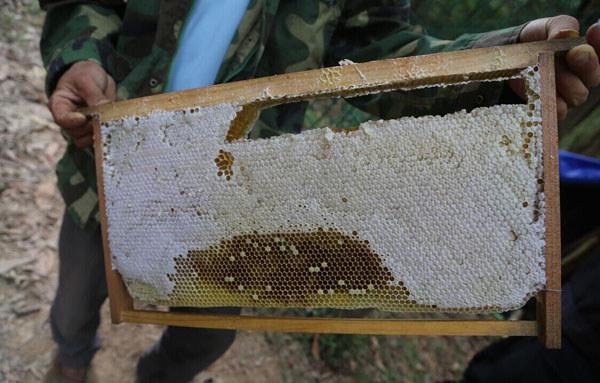 白沙野生蜂蜜