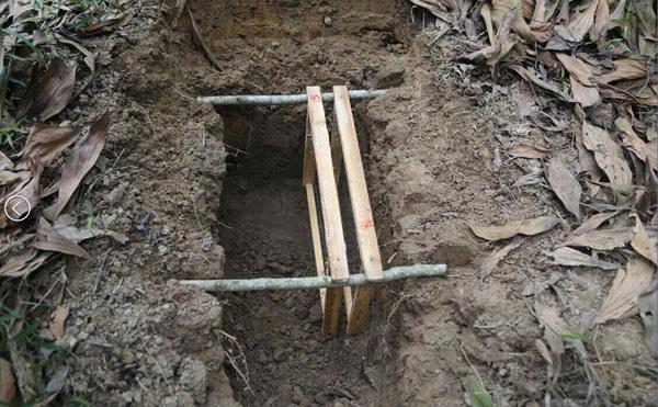 人工搭建的野生蜂巢